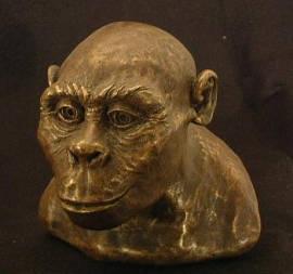 Austrolopithecus_africanus